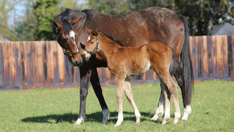 Enable's Sea The Stars half-sister with her dam, Concentric