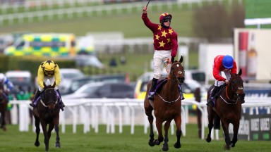 Minella Indo: the Gold Cup winner was one of 13 Irish point-to-point graduates to win at the Cheltenham festival