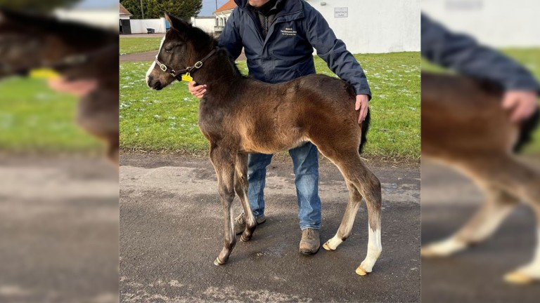Jim and Pippa Boyle's Mukhadram filly out of Black Bess