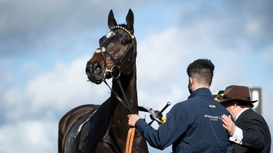 Shishkin: Arkle hero one of two British-trained former Irish point-to-point performers who won at the festival