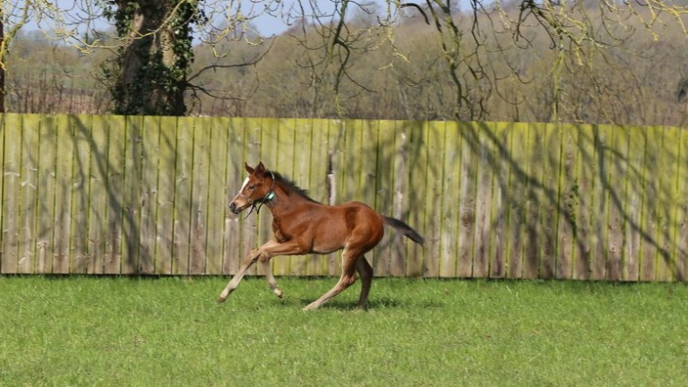Trinity Park Stud's Oasis Dream half-sister to Craven Stakes winner and 2,000 Guineas third Skardu