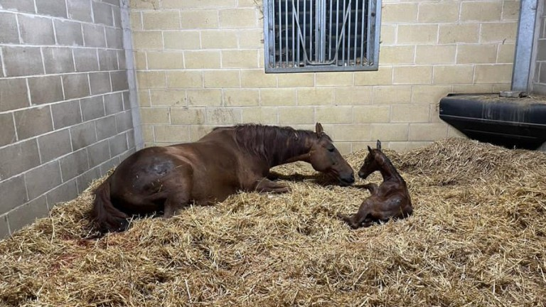 Parks Farm Stud's Cable Bay colt out of Shamandar, a half-brother to Admiral Nelson