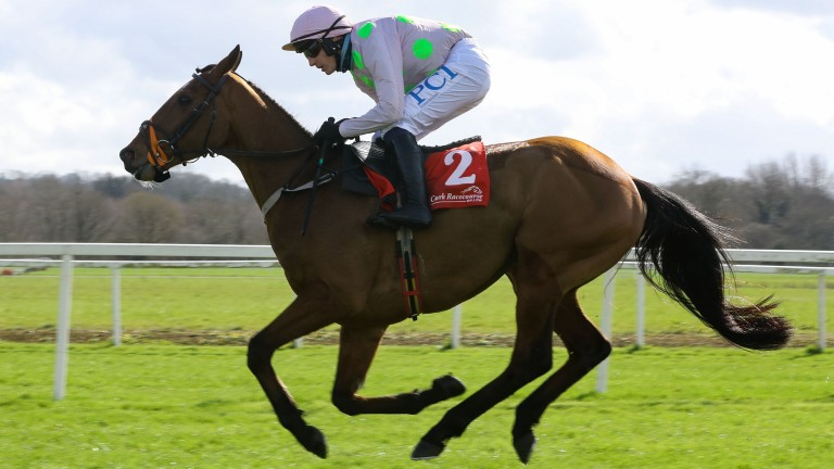 Bapaume: part of a Willie Mullins treble at Tramore on Sunday