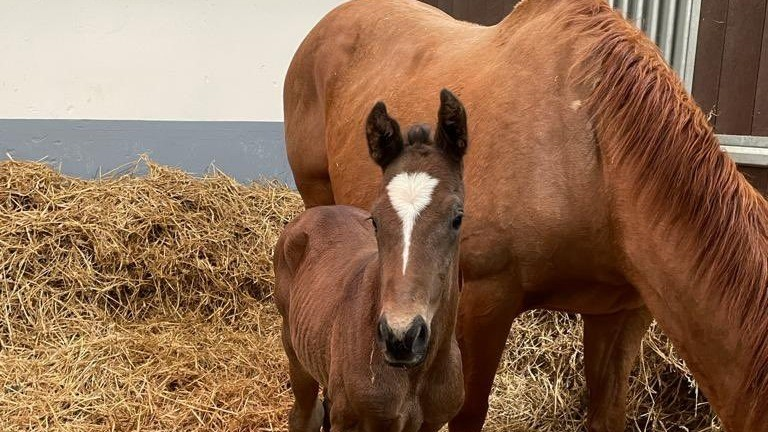 Blandford Bloodstock's Blue Point colt out of On Her Way