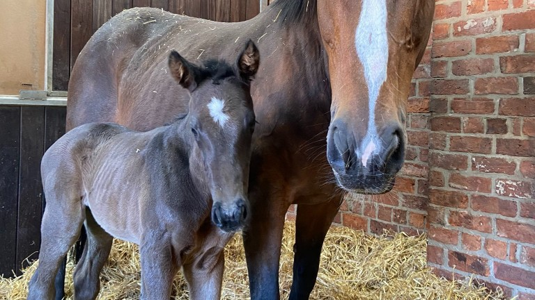 Swanbridge Bloodstock's Passing Glance colt out of Precious Lady