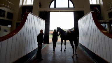 A lot leaves the ring at Tattersalls, where the first physical sale of the year will be held on Wednesday