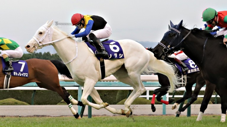 The white filly Sodashi, dazzling in her ability as well as her appearance, has the Oka Sho in her sights