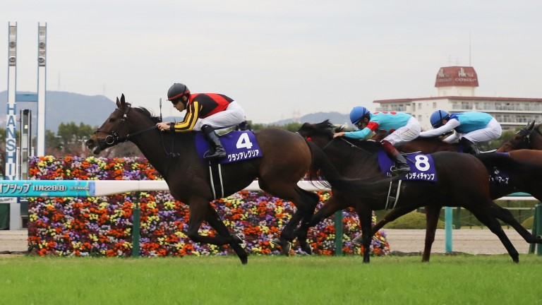 Gran Alegria, the dominant performer in the sprint and mile category, is yet to race beyond a mile