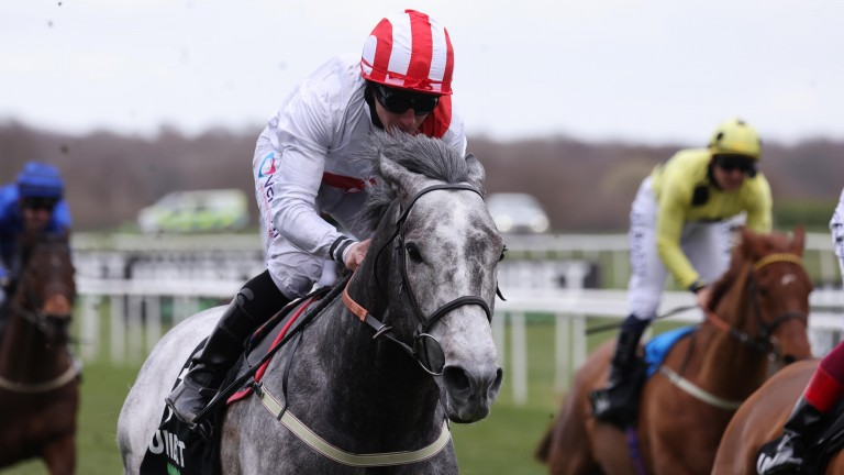 Top Rank: a decision on his Royal Ascot participation has not been made