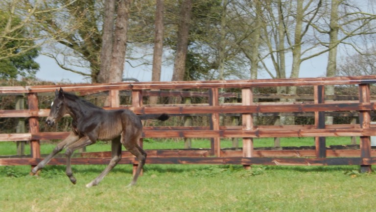 Byerley Stud's Flag Of Honour filly out of Royal Applause mare Crocus Rose
