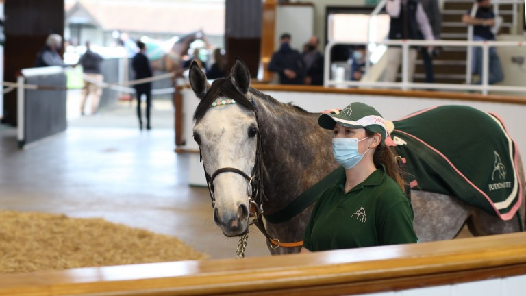Bugle Major in the Tattersalls ring, where he fetched 90,000gns from Richard Hughes