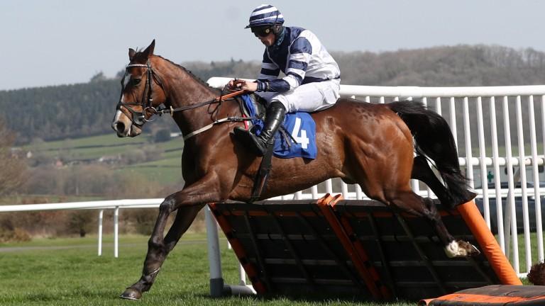 Dobryn: was an impressive winner at Ludlow on Wednesday