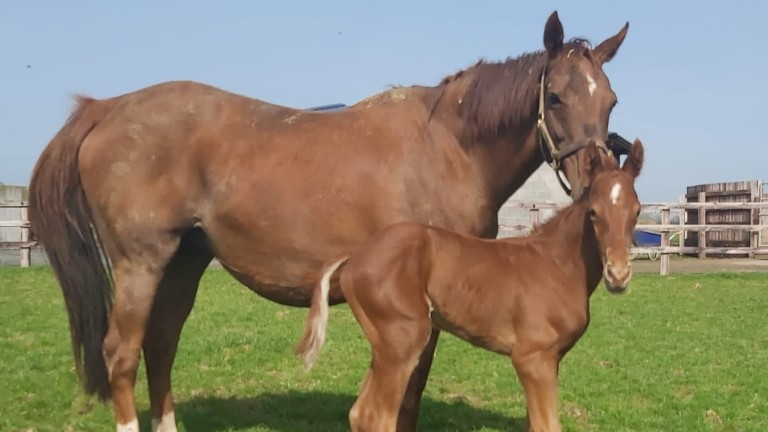 Clara Stud's Night Of Thunder colt out of Il Palazzo
