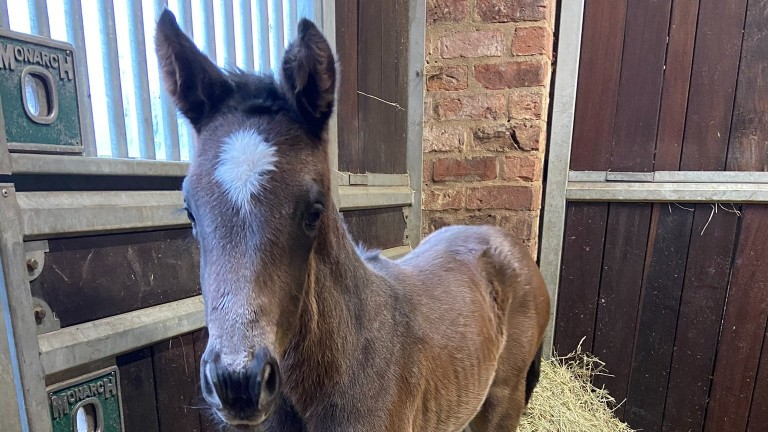 Swanbridge Bloodstock's Gentlewave filly out of Absalom's Girl