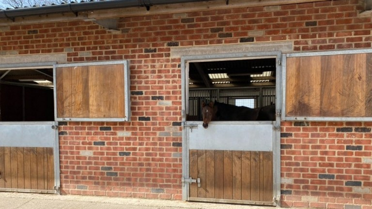 A foal at Tweenhills keeps watch at the stable door