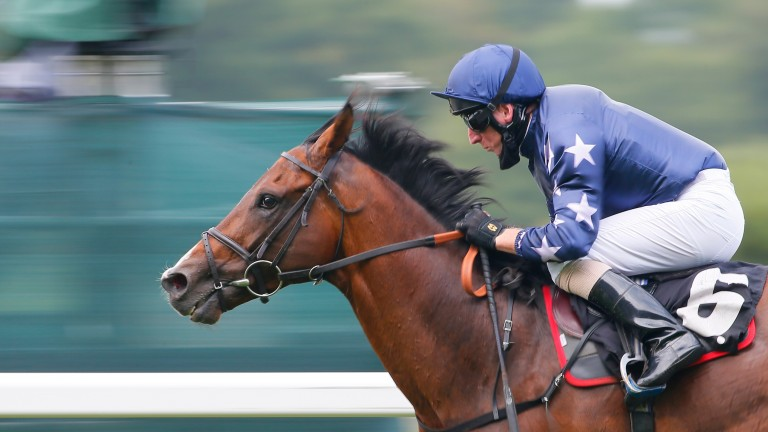 Island Brave: returns to his favourite track