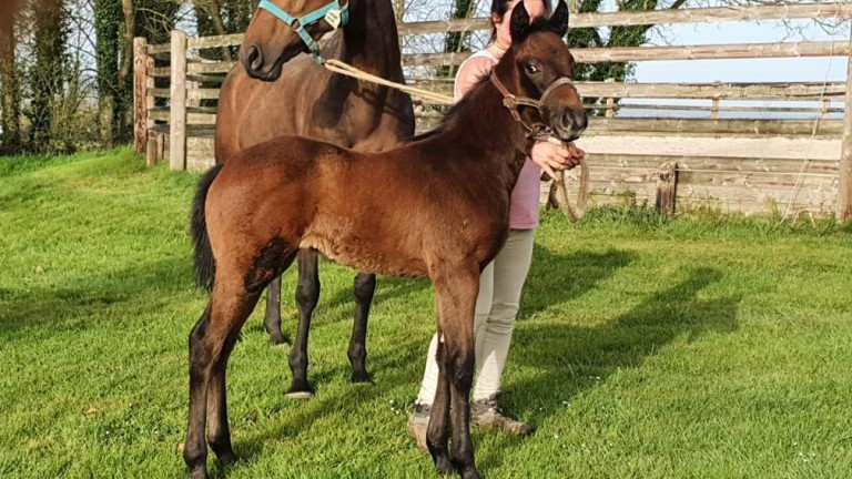 Linda and Reuben Solomon's Dark Angel filly out of the Listed-placed Mayleaf Shine