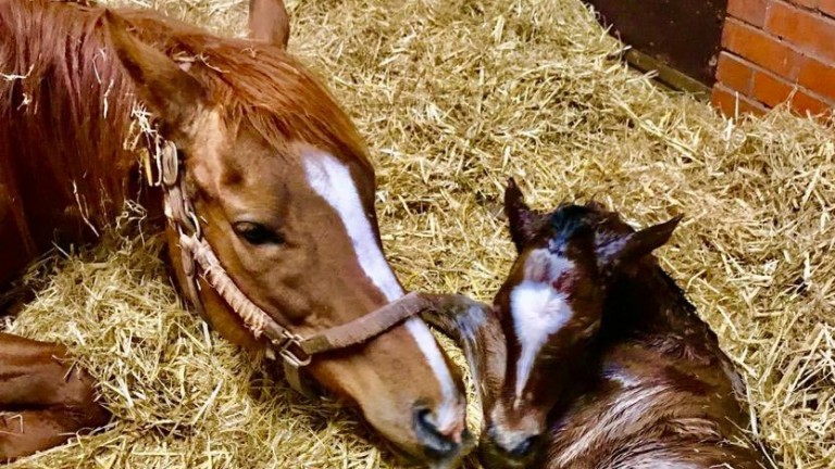 Gary and Lesley Middlebrook's Noble Mission filly out of Volver