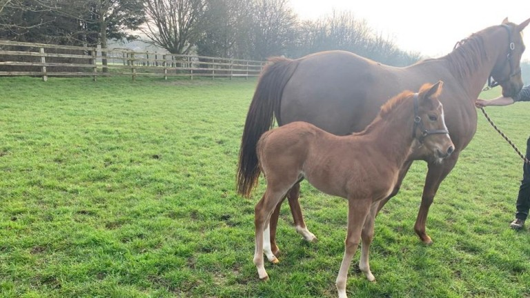 Craig and Laura Buckingham's Cracksman filly out of a Dragon Beat mare