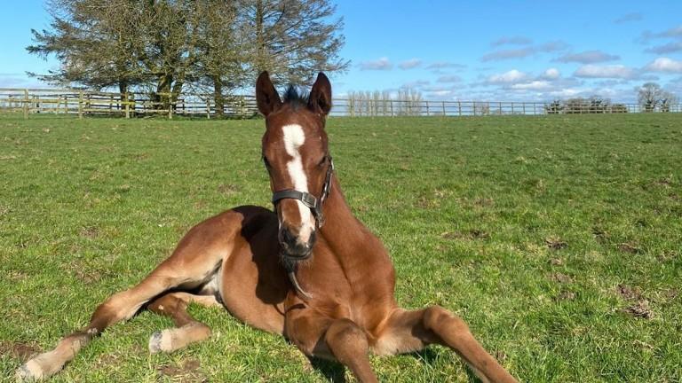 Tara Stud's Unfortunately colt out of Pepperminty enjoying the sunshine