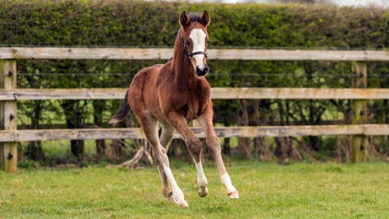Coolmore's Galileo colt out of Group 1-winning sprinter Quiet Reflection