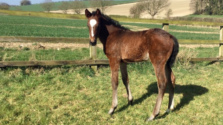 Unity Farm's Dartmouth filly out of Gertie Getaway