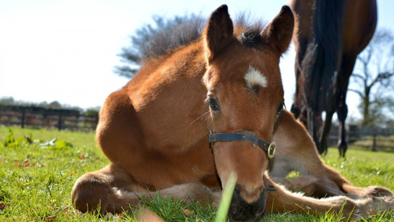 A Poet's Word filly enjoys the sunshine at Knowth Stables