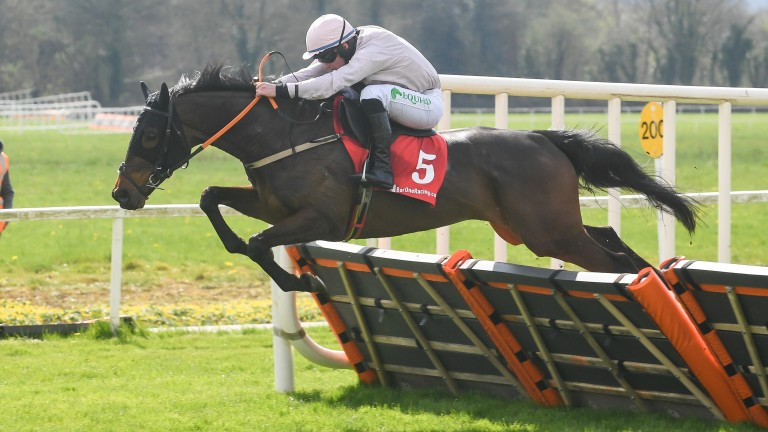 Sole Pretender: talented hurdler will enjoy the drop in trip at Tipperary