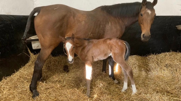 Oakgrove Stud's Oasis Dream filly out of Altesse Imperiale, a half-sister to dual Grade 1 winner Angara