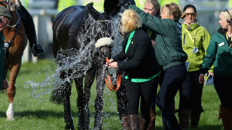 Many Clouds is cooled down after suffering post-race ataxia after winning the 2015 Grand National at Aintree