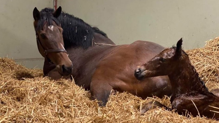 Laurens with her Invincible Spirit colt foal at just a few hours old