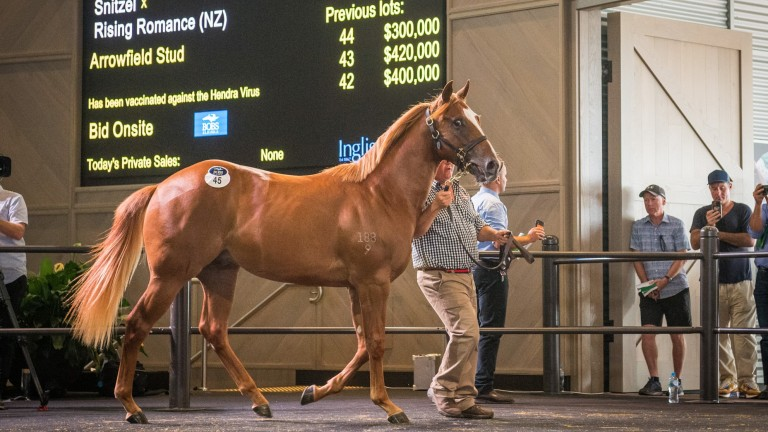 Arrowfield's Snitzel colt sells for $2.5 million at the Inglis Australian Easter Sale