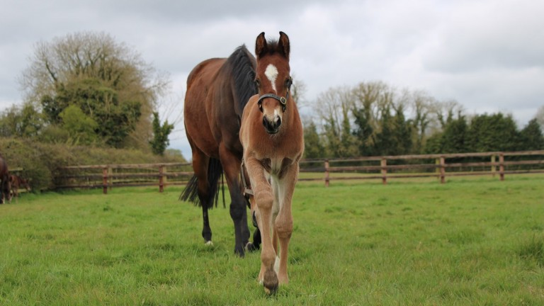 Piercetown Stud's Ten Sovereigns colt out of Cocoa Beach