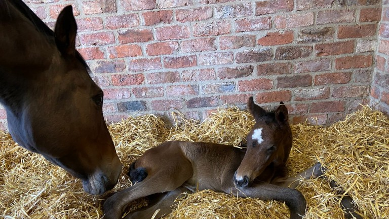 Swanbridge Bloodstock's Telescope filly out of Well Connected