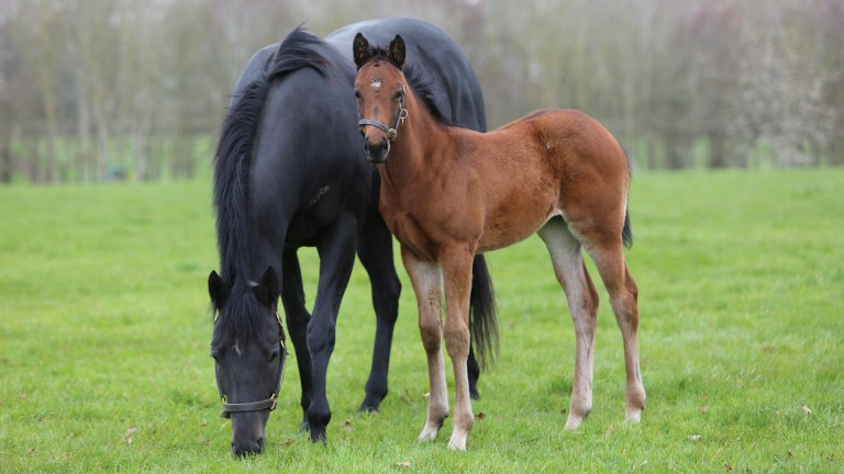Juddmonte's Frankel filly out of Group 2 winner Soffia