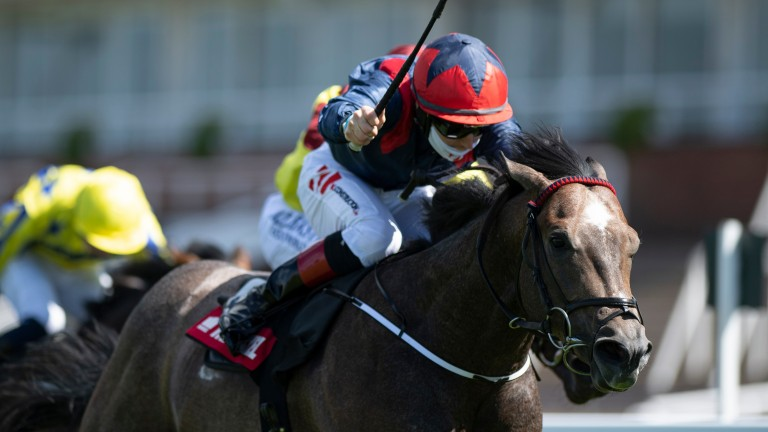 Steel Bull: Kilbrew Stables graduate wins the Molecomb Stakes at Goodwood