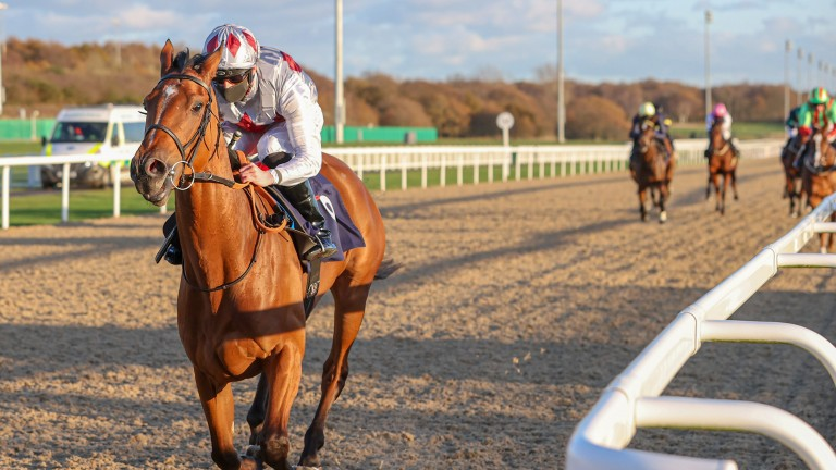 Teona: the highlight of Roger Varian's four runners at York on Wednesday
