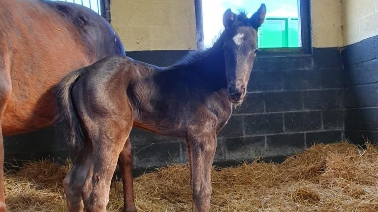 Alne Park Stud's Dink colt, named Duke after the late Duke of Edinburgh