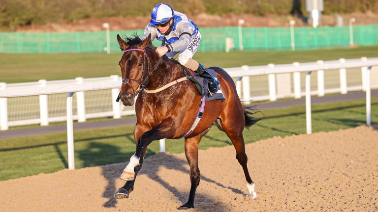 Tasman Bay: recent winner at Newcastle is a promising sort
