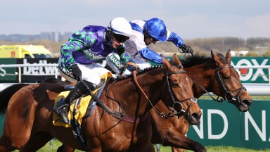 Thyme Hill and Tom O'Brien (nearside) edge past Roksana for a neck victory in the Stayers Hurdle at Aintree that could change the direction of the £104,000 Tote Ten To Follow first prize
