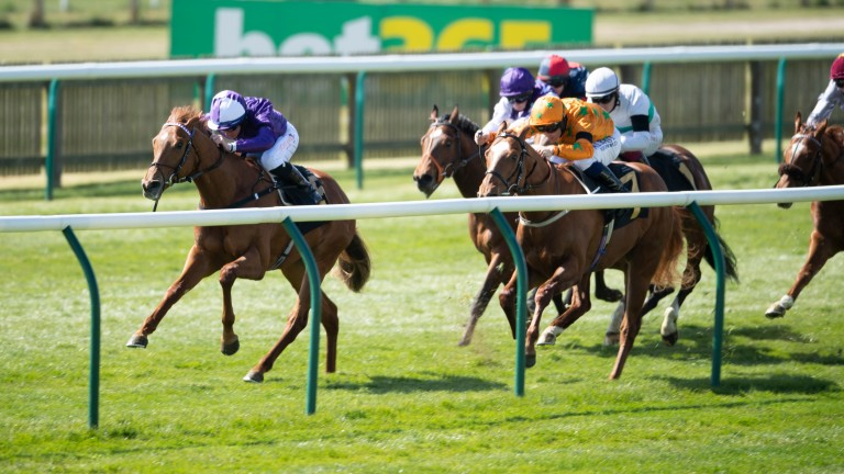 Forca Brasil (left): the speedy juvenile could be one for the Norfolk Stakes