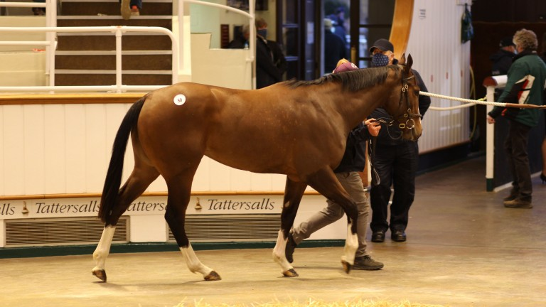 Lot 50: the Night Of Thunder filly, consigned by Star Bloodstock, sells to the Cool Silk Partnership and Stroud Coleman Bloodstock for 265,000gns