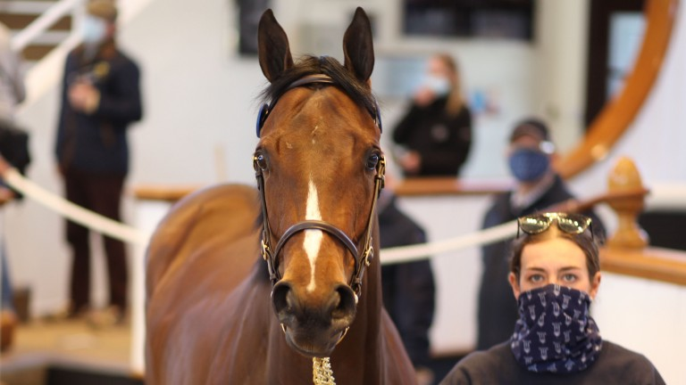 Lot 25: Aguiar Bloodstock's Dabirsim filly makes 240,000gns to Ebonos