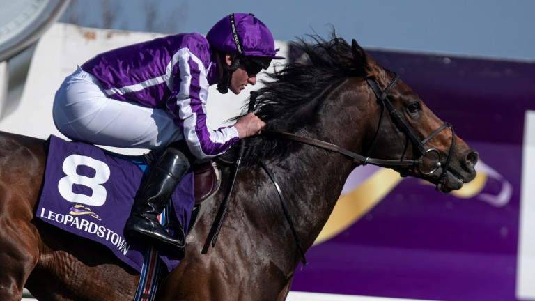 Lope Y Fernandez: on course to be Aidan O'Brien's sole runner in the Lockinge