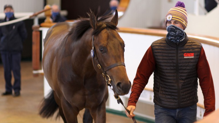 Lot 96: the Aclaim colt out of Step Sequence sells to Opulence Thoroughbreds for 150,000gns