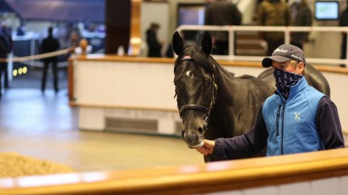 Lot 143: the Caravaggio colt out of Bright Sapphire tops day two of the Craven Sale when bought by Sackville Donald for 240,000gns