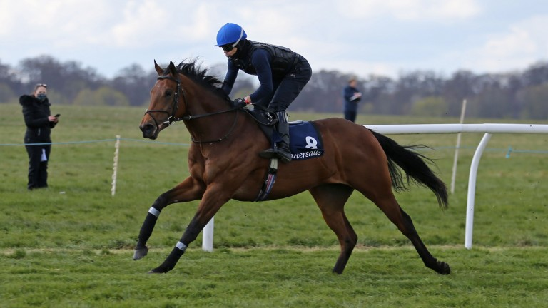 Lot 8: the Kingman colt out of Flying Fairies was purchased privately by Manor House Stud for 335,000gns