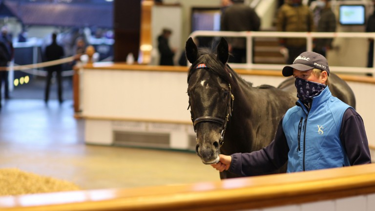 Lot 143: a big result for first-season sire Caravaggio when Sackville Donald purchased the Yeomanstown Stud-consigned colt for 240,000gns