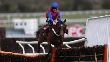 Bannixtown Glory: won by a length and three quarters at Cheltenham on Thursday