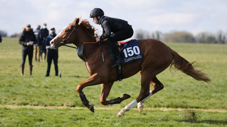 Micky Cleere aboard last week's strong-selling Hard Spun colt